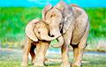 Ученые рассказали необычный факт о «слоновьих семьях»