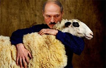 Зато овцевод хороший