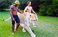 Самую большую кошку в мире сняли на видео
