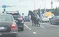 Видеофакт: В Минске милиционеры ловили лошадь на проезжей части