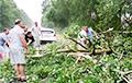 Паваленыя дрэвы, падтопленыя вуліцы: непагадзь прайшлася па Берасцейскай вобласці