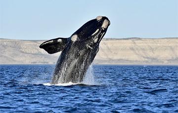 Ученым впервые удалось записать пение японского кита