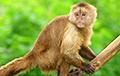 Ученые открыли обезьян, использующих орудия труда тысячи лет