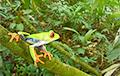Ученые нашли «затерянный мир» возле легендарного поселения в Гондурасе