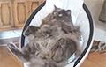 Качающаяся в электрической колыбели кошка стала звездой Сети