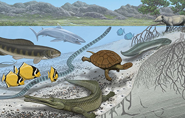 Палеонтологи объяснили загадку гигантских существ древнего «Сахарского моря»