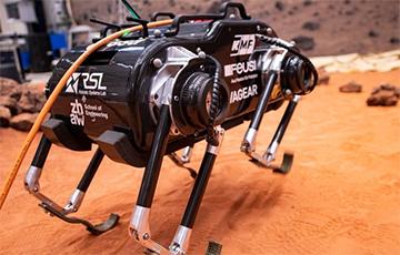 Видеохит: Робот на четырех лапах играет в пинг-понг