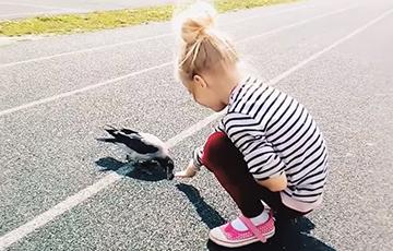 Видеофакт: В Минске ручная ворона катается на спинах прохожих