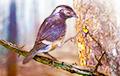 Ученые научили птиц песням, которые они никогда не слышали