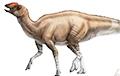 Ученые открыли новый вид динозавра с необычными особенностями