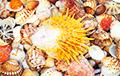 Диетолог назвала морепродукты, полезные для оздоровления и похудения