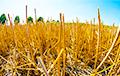 В Германии заявили о засухе «катастрофических масштабов»