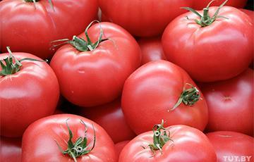Россия ограничила ввоз томатов и перцев из Беларуси