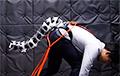 Видеофакт: Ученые создали роботизированный хвост для людей