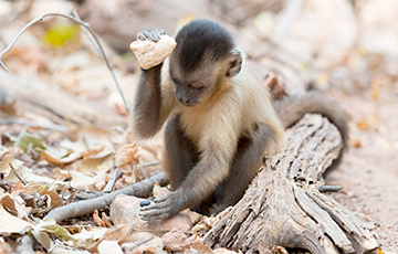Ученые выяснили, почему еще ни одна обезьяна не превратилась в человека