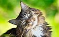 Ученые создали устройство, позволяющее понимать кошачий язык