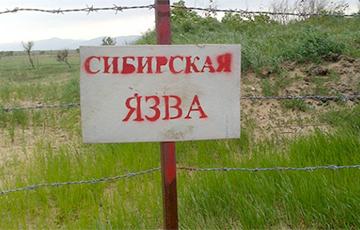 Чиновники отказались комментировать журналистам случай сибирской язвы