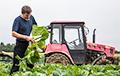 Белорусский фермер: Наши агрогородки — это позор