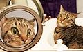 Удивленный своим отражением кот стал звездой Сети