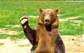 Медведь, попытавшийся укатить с крыльца понравившуюся тыкву, стал звездой Сети