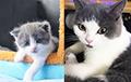 В Китае запустили услугу по клонированию кошек