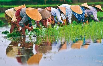 Змяінае віно і пластыкавыя грошы: сем дзіўных фактаў пра В'етнам
