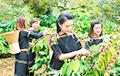 Змеиное вино и пластиковые деньги: семь удивительных фактов о Вьетнаме