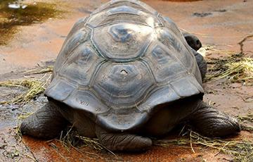 Ученые нашли гигантскую черепаху, которая давно считалась исчезнувшей