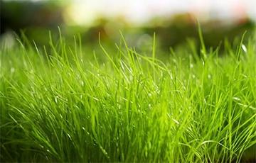 «Баста»: Денег на потемкинские деревни нет, покрасили траву