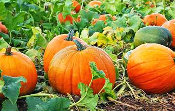 Топ-5 самых полезных продуктов сентября