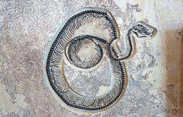 Ученые обнаружили следы одного из самых древних существ Земли