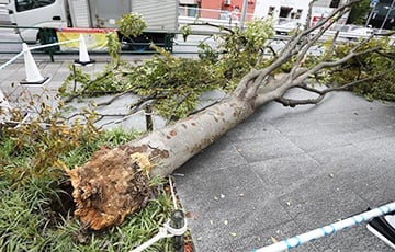 На Японию обрушился мощный тайфун «Факсай»