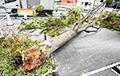 На Японію абрынуўся магутны тайфун «Факсай»