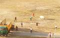 Видеофакт: Побег быка в День города в Гомеле