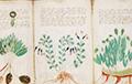 Таямніца манускрыпта Войніча: Навукоўцы вылучылі новыя гіпотэзы