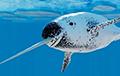 Ученые нашли гигантский рог «арктического единорога»