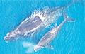 Ученые рассказали, почему киты в общении переходят на шепот