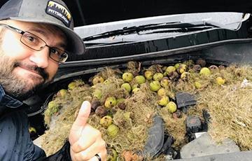 Фотофакт: В США белки спрятали по капотом авто сотни орехов