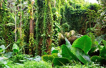 Ученые нашли в джунглях на месте города майя затерянное «посольство»