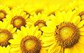 Ученые рассказали, жителей каких стран радует желтый цвет