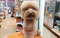 «Квадратные» собаки из Японии стали звездами Сети