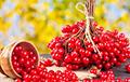 Эксперты назвали самые полезные осенние ягоды