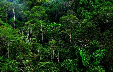 Ученые обнаружили таинственный город в джунглях Камбоджи