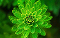 Ученые показали первое в мире селфи, сделанное растением