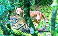Считавшегося вымершим тасманийского волка заметили в Австралии