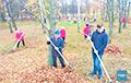 В Минске работников школ сгоняют убирать листья в парке