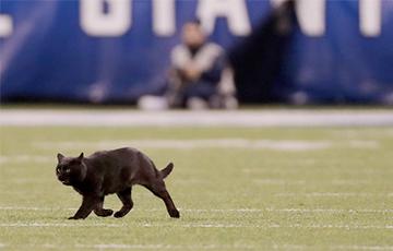 Черный кот за две минуты стал главной звездой матча по американскому футболу