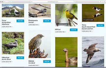 В Новой Зеландии проводят выборы птицы года