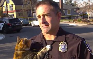 Видеохит: Кошка прервала серьезное интервью