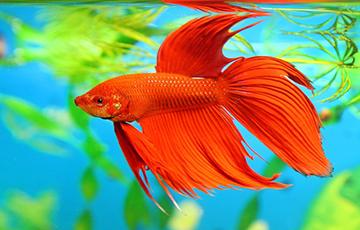 В тихом омуте рыба водится